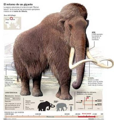 20081212094633-mamut.jpg