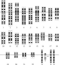 20090116100057-250px-karyotype-1-.png