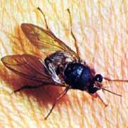 20100321194823-guinea-mosca-1-.jpg
