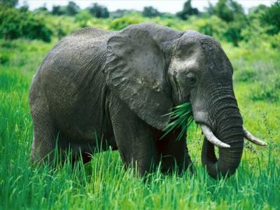 20101201213158-elefante-500x375.jpg