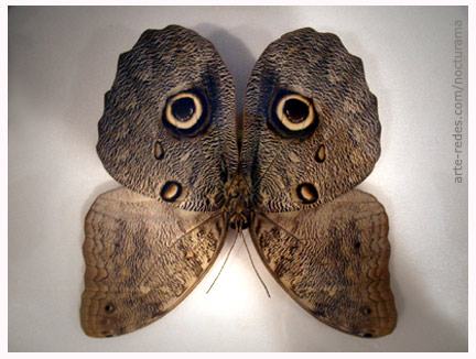 20120217163548-mariposa-buho-arte-redes.jpg