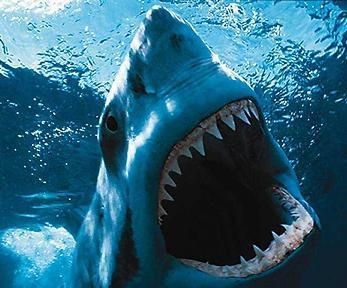 20081210090220-tiburon-1-.jpg
