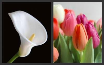 20110206231137-collage.jpg