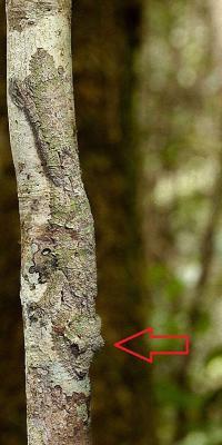 20120214100330-extraordinarios-ejemplos-de-camuflaje-animal-03-1-.jpg