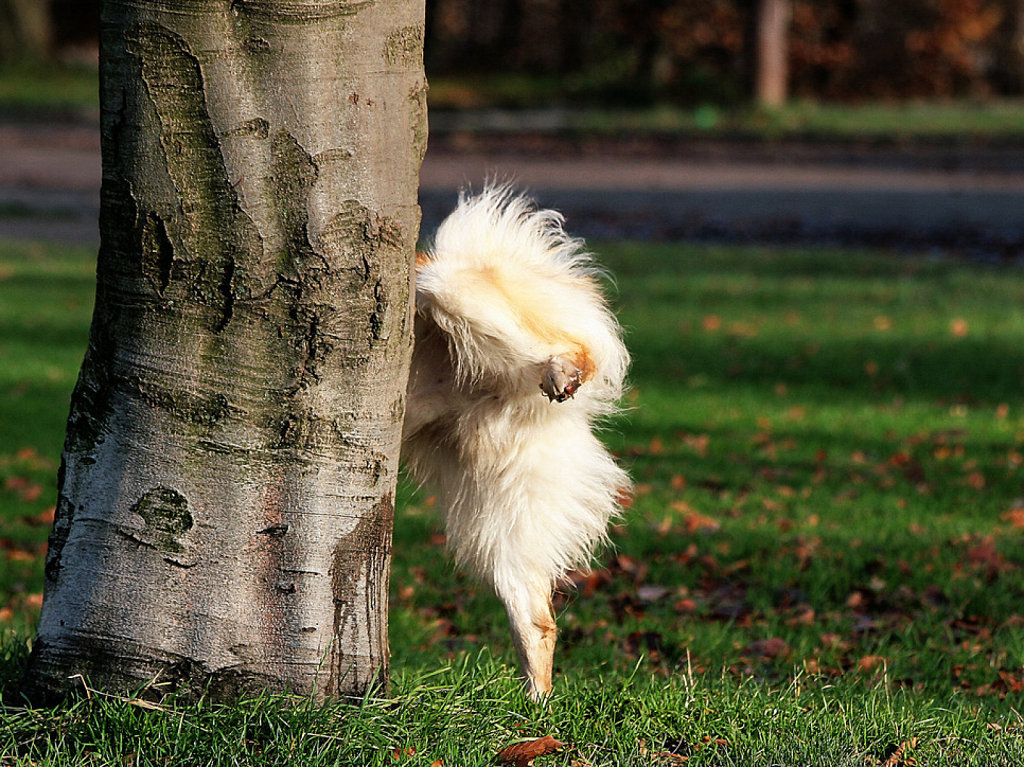 Perro marcando su territorio